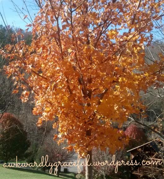 orange-tree-edited